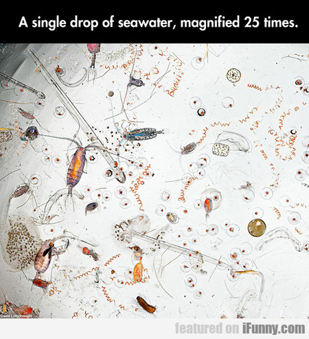 A Single Drop Of Seawater, Magnified 25 Times.