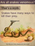 Are All Snakes Venomous? That's A Myth.