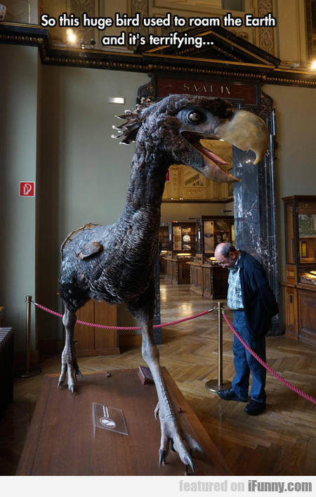 So This Huge Bird Used To Roam The Earth