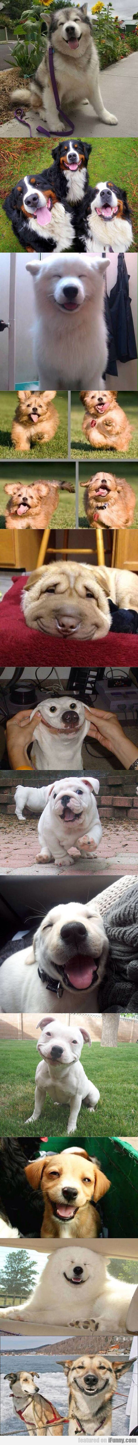 Best Smiling Dogs On The Internet