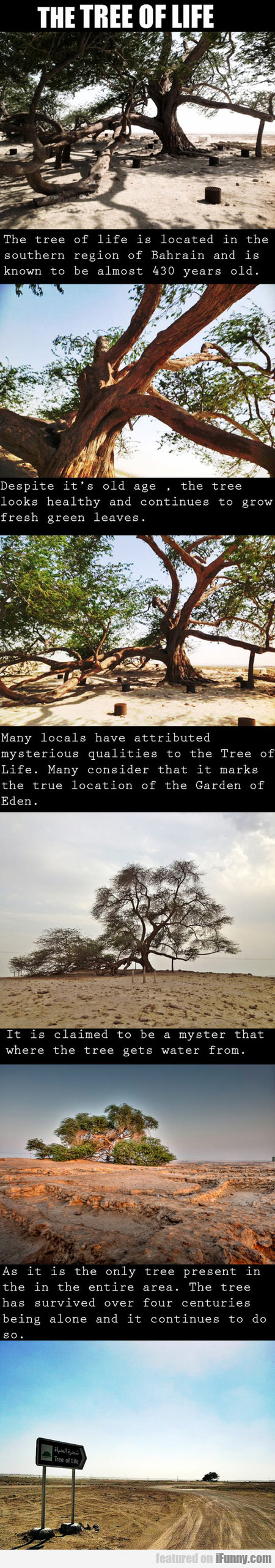 The Tree Of Life Is Located In Bahrain
