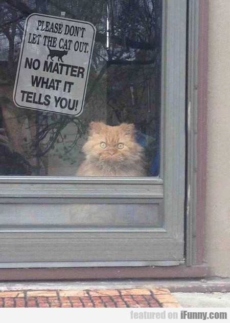 No Matter What The Cat Tells You