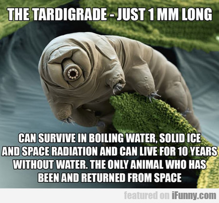 The Tardigrade Returned From Space
