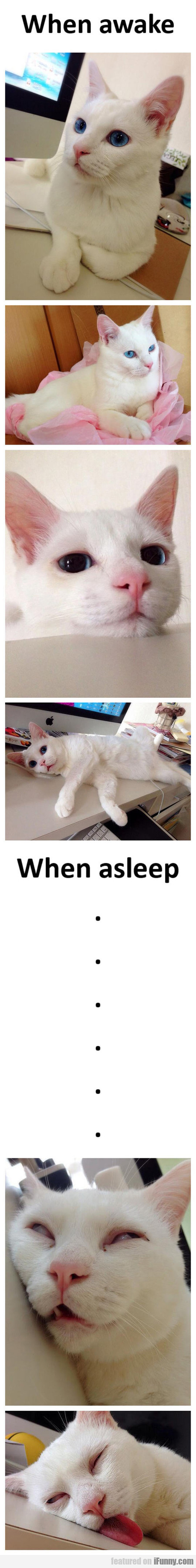 When A Cat Goes To Sleep
