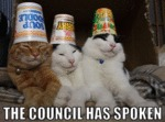The Cat Council Has Spoken