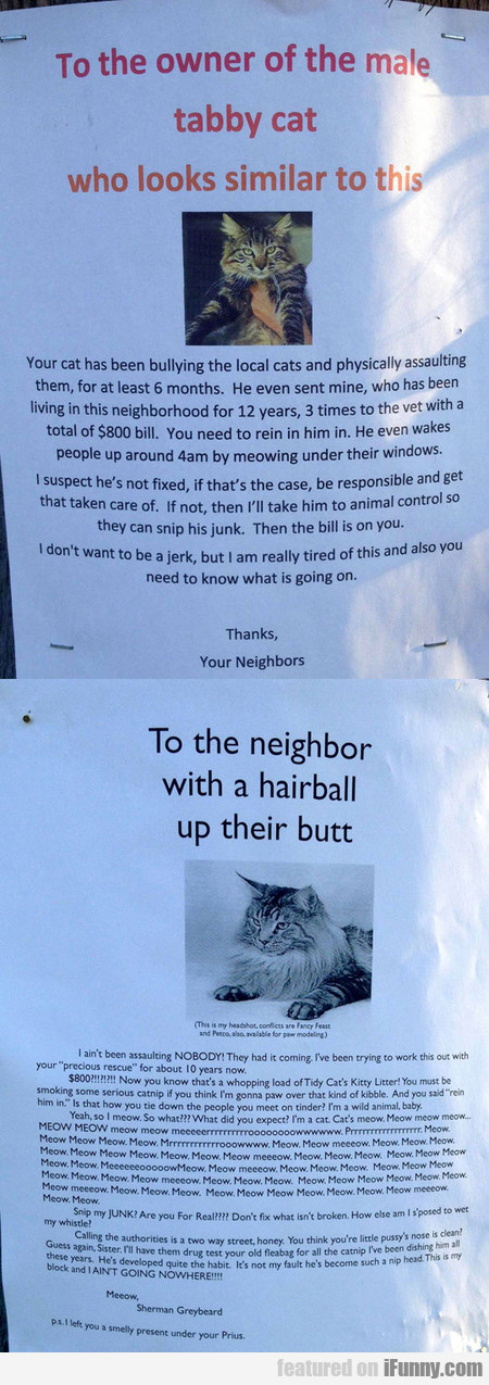 To The Owner Of The Male Tabby Cat...