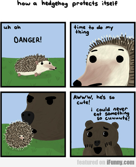 how a hedgehog protects itseIf