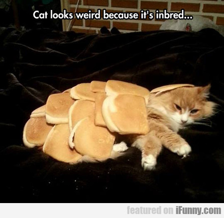 Cat Looks Weird Because It's Inbred...
