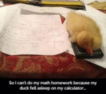 So I Can't Do My Math Homework Because My Duck...