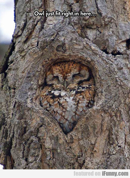 Owl Fits Perfectly Here