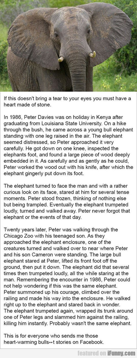 Peter Davies Came Across A Young Bull Elephant