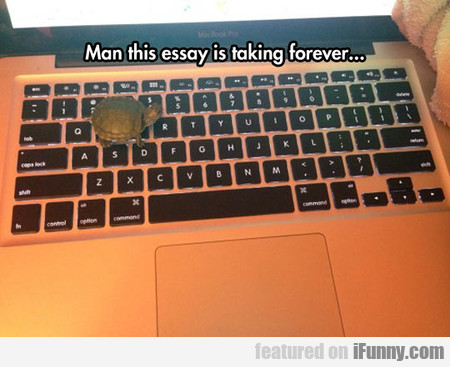 That's Why My Essay Is Not Finished Yet