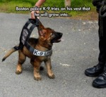 Boston Police K-9 Tries On His Vest