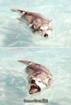 The Dog Who Thinks Is A Crocodile