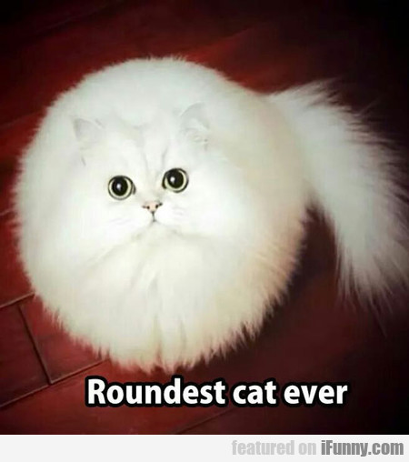 This Is Roundest Cat Ever