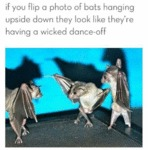 A Photo Of Bats Hanging Upside Down They Look...