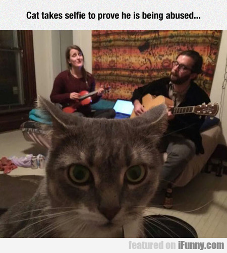Cat Takes Selfie To Prove He Is Being Abused...