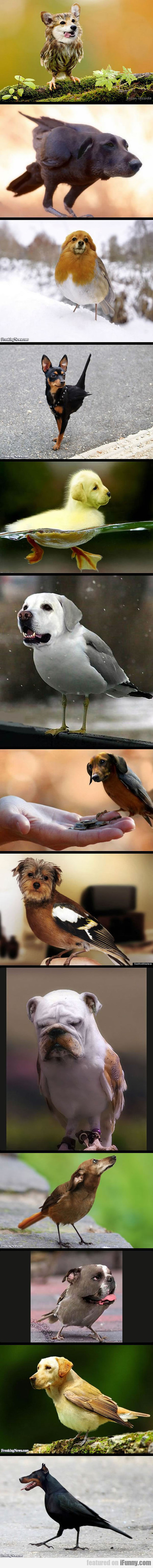 Dogs + Birds = This