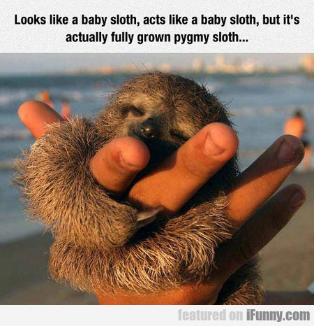 Looks Like A Baby Sloth, Acts Like A Baby Sloth