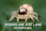 Spiders Are Just Land Octopuses