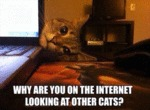 Jealous Overly-attached Cat