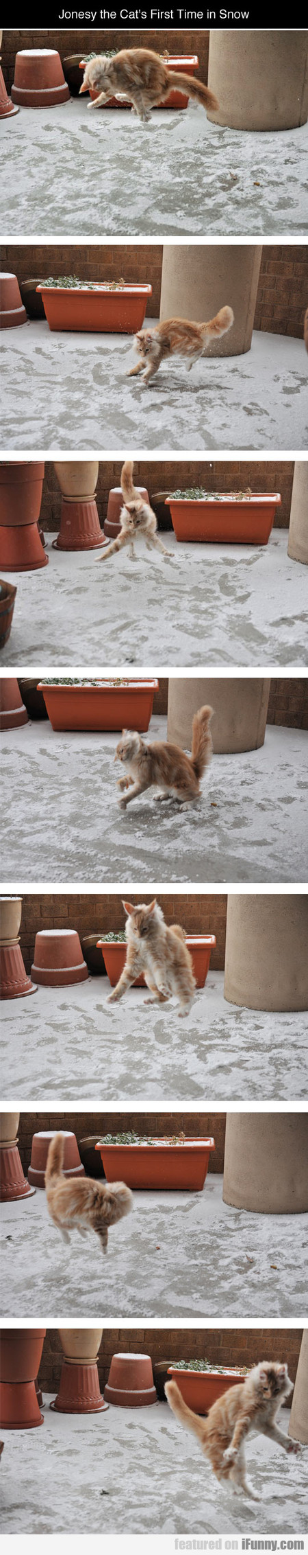 Jonesy The Cat's First Time In Snow