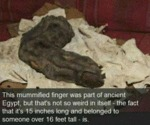 This Mummified Finger Was Part Of Ancient Egypt