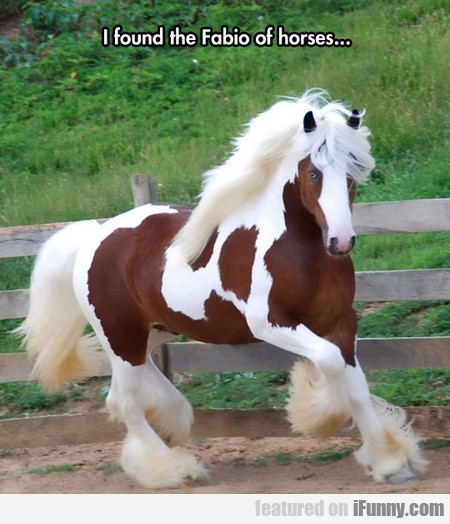 I Found The Fabio Of Horses