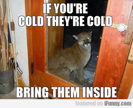 if you're cold they're cold