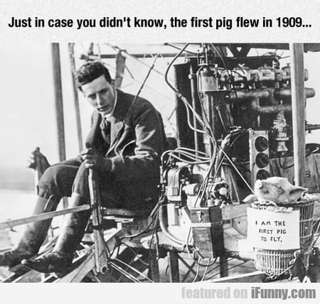 Just In Case You Didn't Know, The First Pig Flew..