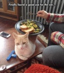 Good Use For The Cat