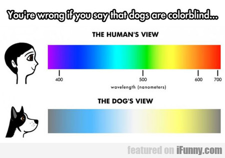 You're Wrong If You Say That Dogs Are Colorblind