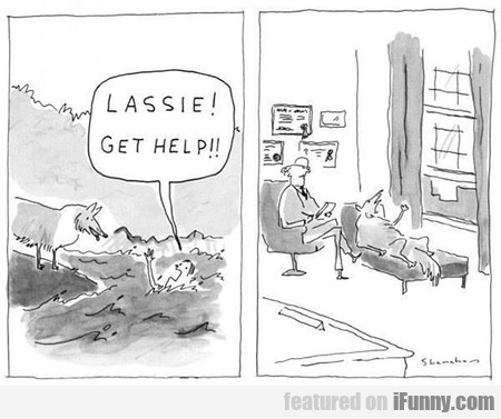Lassie Finally Gets Help