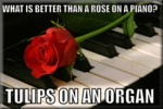 What Is Better Than A Rose On A Piano?