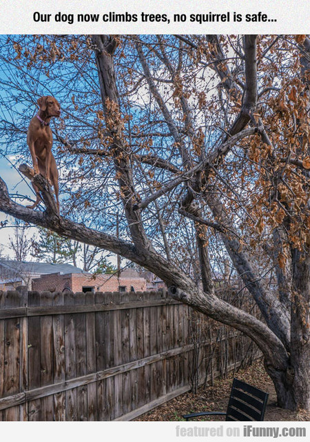 Our dog now climbs trees