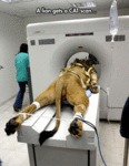 Most Literal Cat Scan Ever