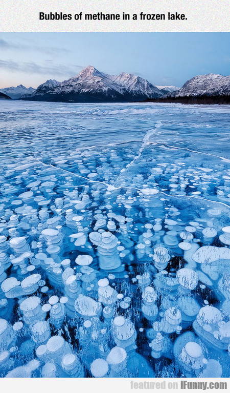 Bubbles Of Methane In A Frozen Lake