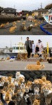 Cats Occupied An Island In Japan