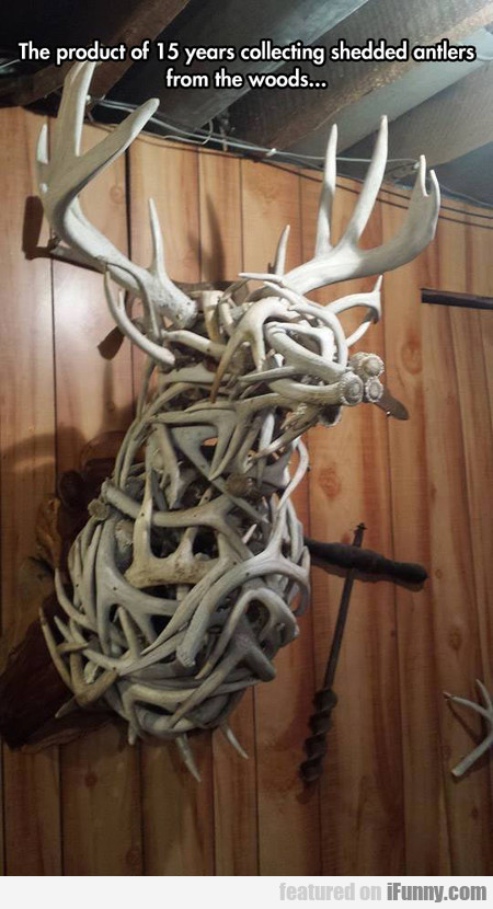 Magnificent Sculpture Using Antlers