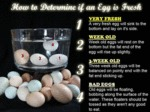 How To Determine If An Egg Is Fresh