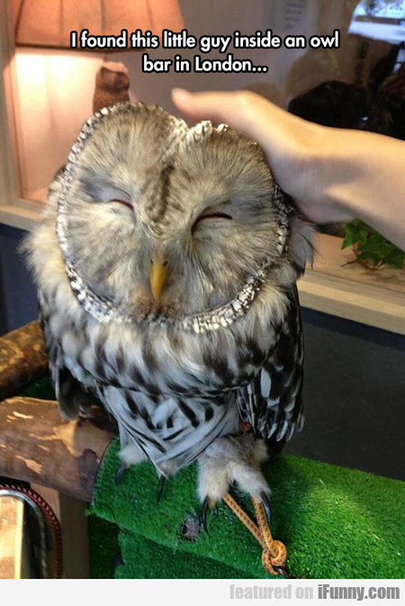 There Is A Owl Bar In London