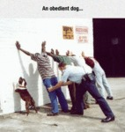 An Obedient Dog...