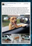 Some Police Officers Know How To Interact With Dog