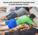 Dogs Are Always There For You