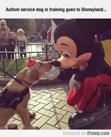 Autism Service Dog In Training Goes To Disneyland.