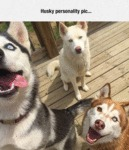 The Personality Of A Husky
