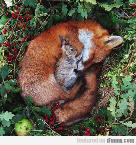 Unlikely Friends Are The Cutest