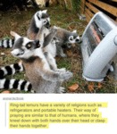 Lemurs And Their Religions