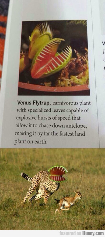 Carnivorous Plant In Action