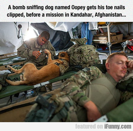 A Bomb Sniffing Dog Named Oopey Gets His Toe Nails